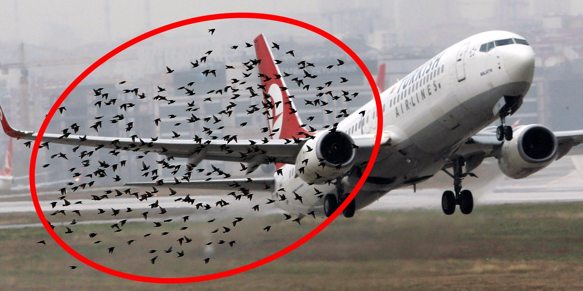 столкновение с птицами